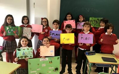 4th grade pupils have been working on Plants