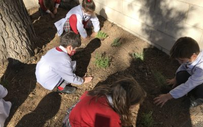Plants around us. Proyecto de aprendizaje e investigación